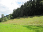 Walk near the Black Forest