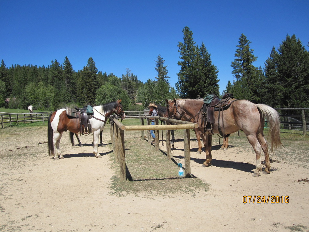 Horses ready to ride
