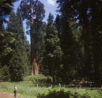 Sequoia National Park 1970